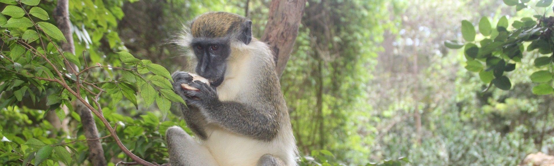 Djurliv på Barbados
